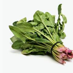 菠菜的食譜
