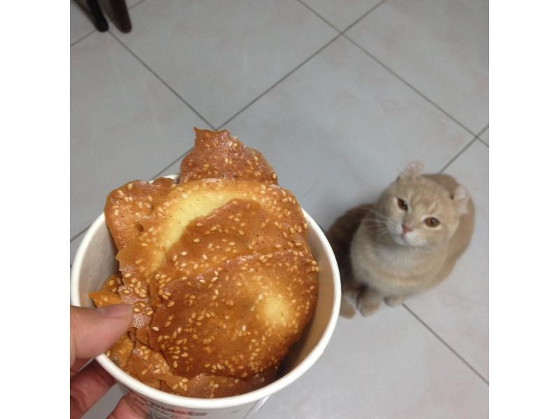 芝麻瓦片餅(簡單養生零嘴)