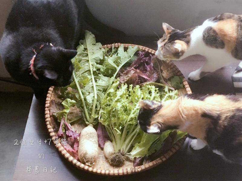 鹽漬蘿蔔葉(惜物愛物珍惜可用食材)