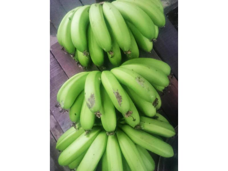 簡單香蕉催熟