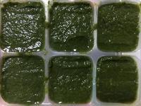 【副食品】菠菜泥 電子鍋烹飪