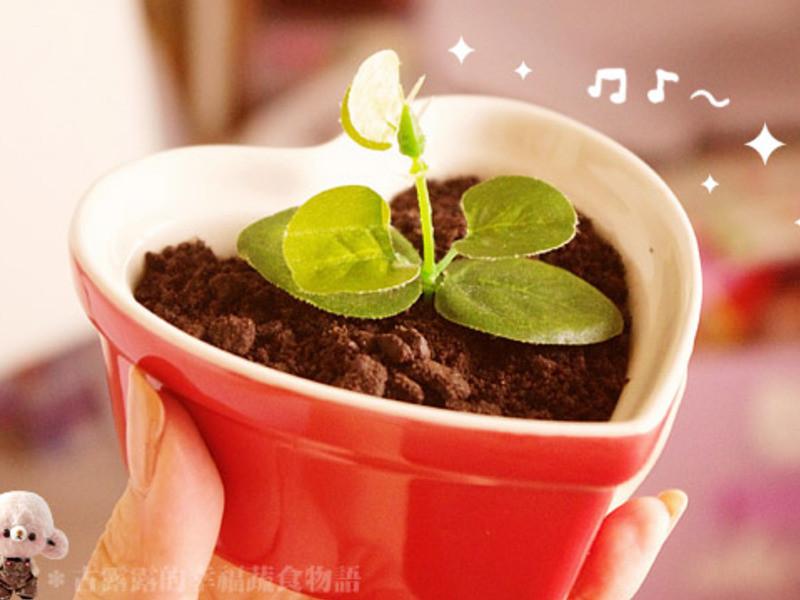 盆栽蛋糕 DIY*古露露(・∀・)
