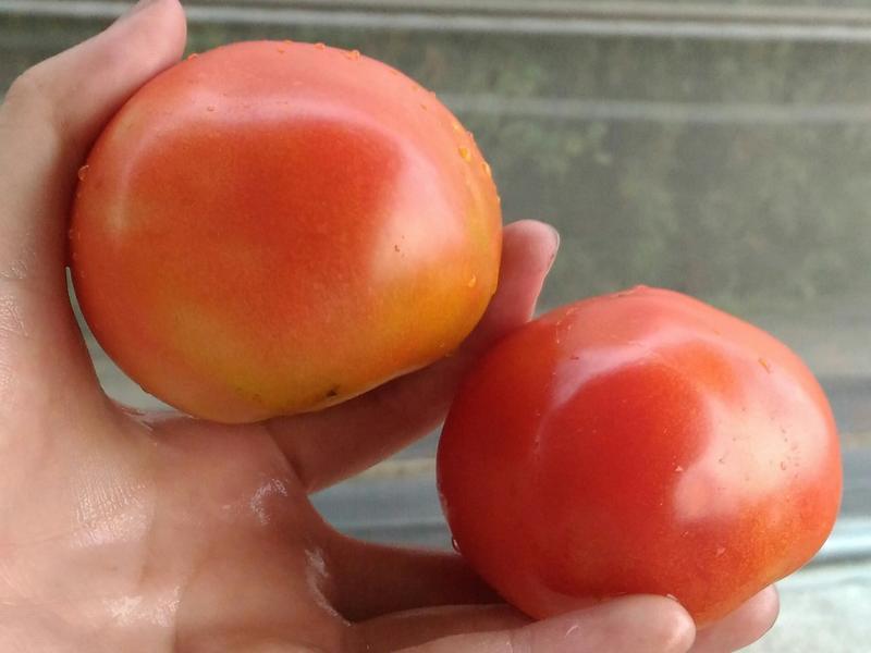 簡易蕃茄蛋乾麵🍅