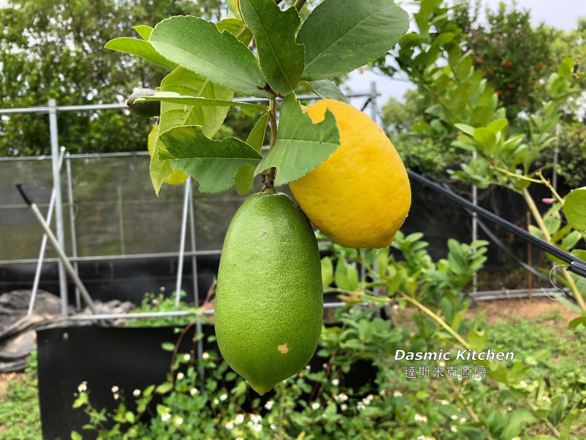 柑橘類外皮保存與運用 ~附『實作影片』~