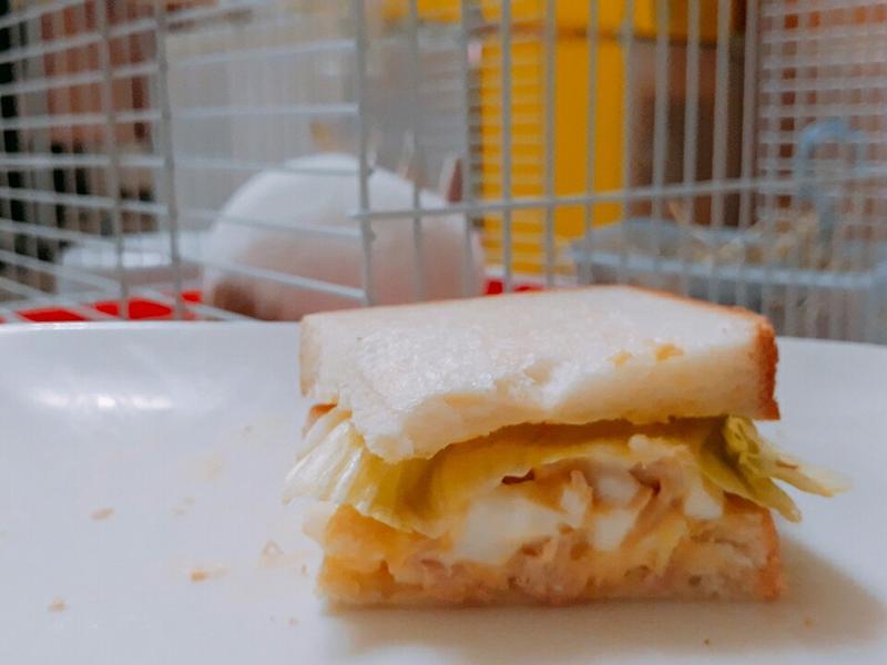 上班族快速鮪魚蛋沙拉三明治(手殘也能做)