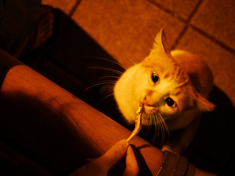 自製貓零食:無鹽小魚乾