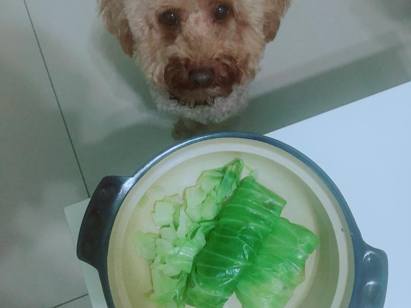 「寵物」高麗菜肉捲
