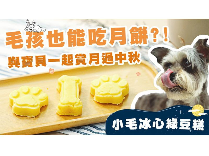 【毛爸鮮食提案】沁涼爽口~小毛冰心綠豆糕