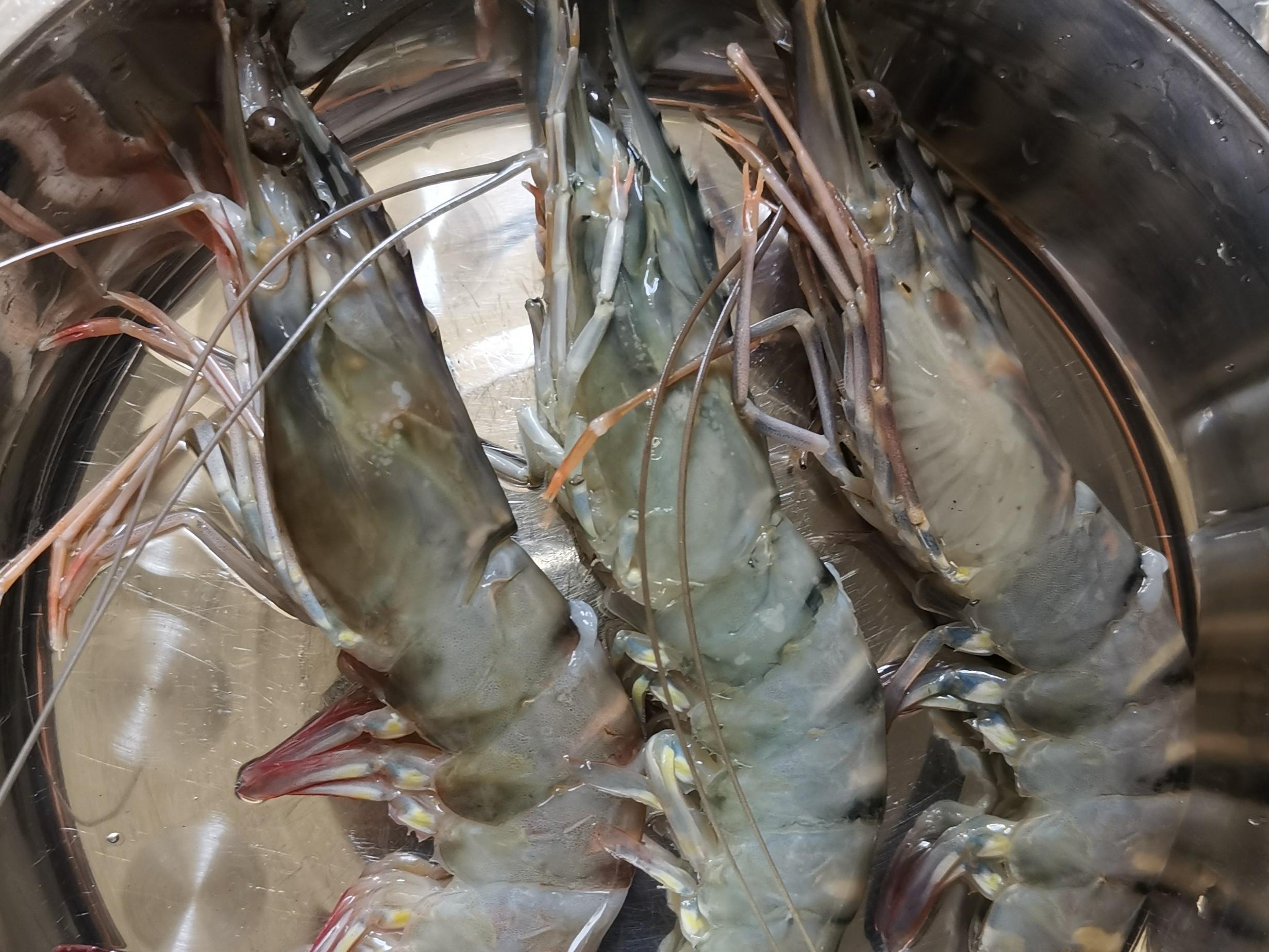 光波 - 芥末沙律大蝦