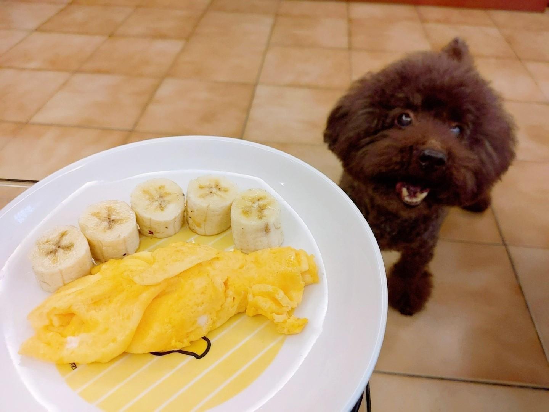 【狗狗🐶小點心】鮮奶歐姆蛋🍳