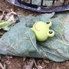 🐸青蛙蓋被被農場🐸