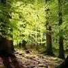 Leafy Grassy