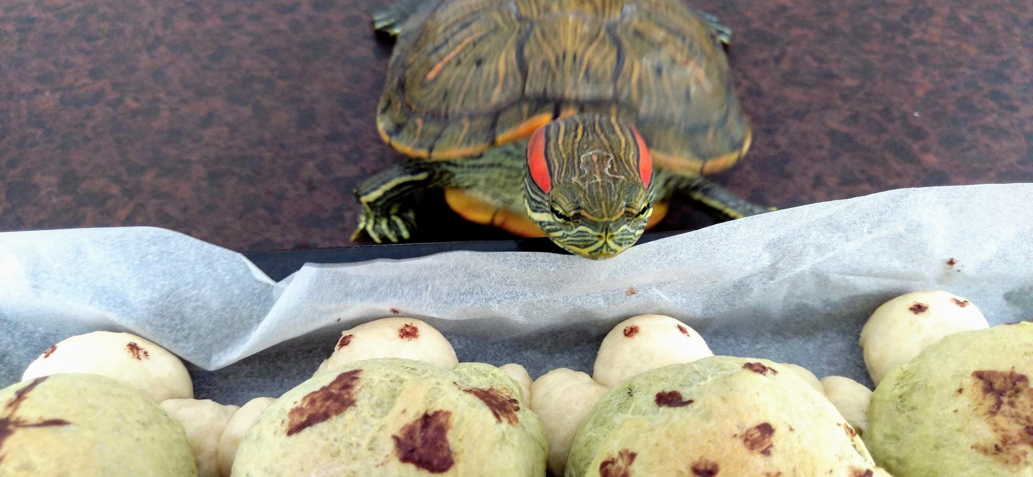 不食人間煙火的龜 𓆉 的個人封面